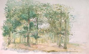 La forêt de Clairmarais en aquarelle