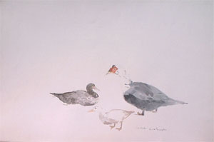 Canards de Madame Denis en aquarelle
